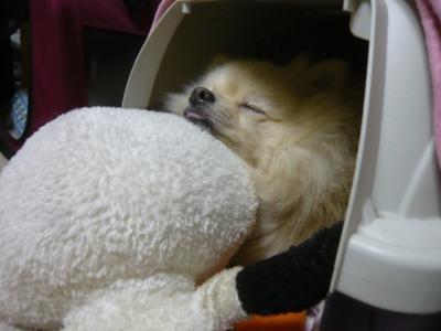 快適な枕を探し中。。。