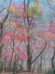 鍋割山の紅葉写真4