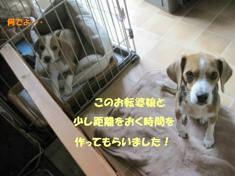 IMG_6301_sh01.jpg