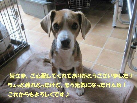IMG_6302_sh01.jpg