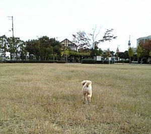 20091122jhgdf.jpg