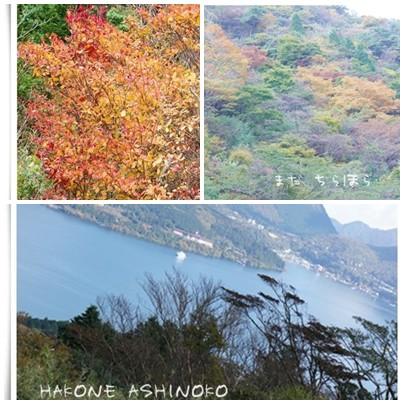 箱根の紅葉状況