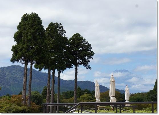 山のホテルのお庭