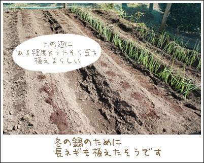 無農薬野菜畑