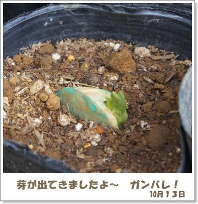 ちっちゃい芽が?