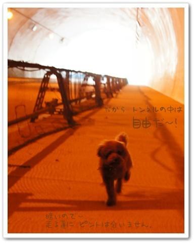 トンネル内 最高だぜ