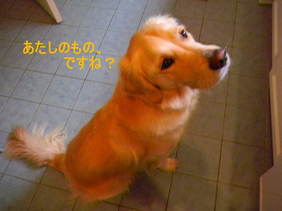DSCN0181_20101025080744.jpg