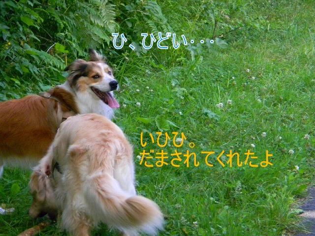 DSCN0187.jpg