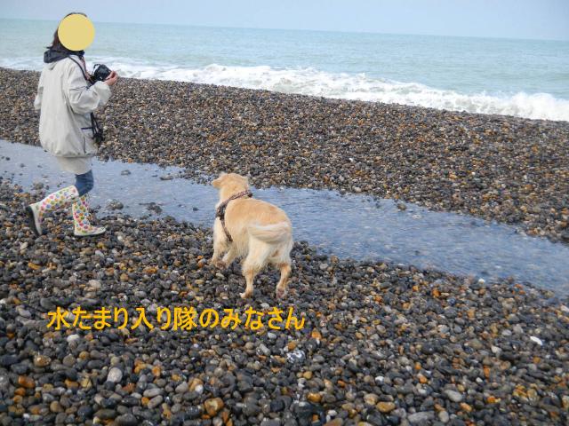 DSCN9825_20101125092633.jpg
