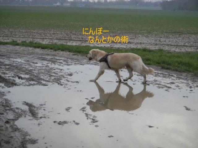 DSCN9886_20101125095925.jpg