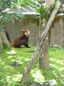 れっサーパンダ