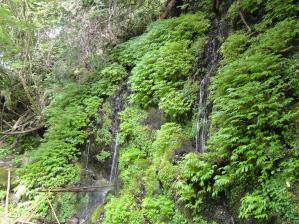 コピー ~ 2011 7 9-10 蝶ヶ岳 004