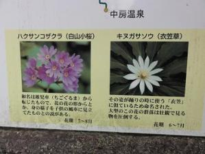 コピー ~ 2011 7 9-10 蝶ヶ岳 008