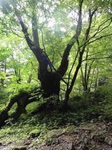 コピー ~ 2011 7 9-10 蝶ヶ岳 015