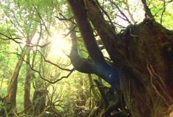 生きている森