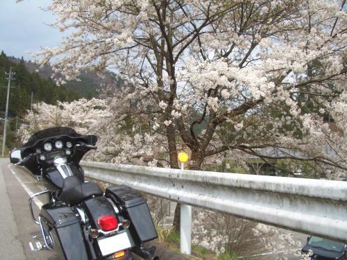snap_chikuwabuta_201043234954.jpg