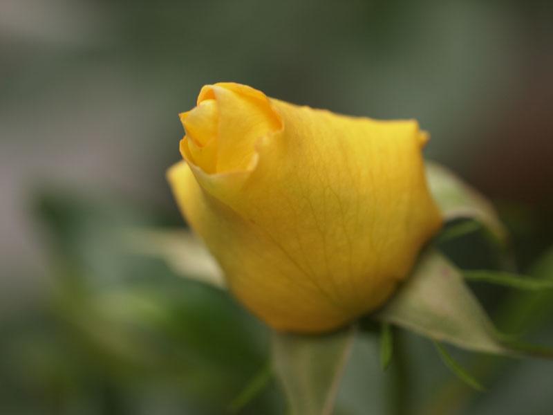 201105102.jpg