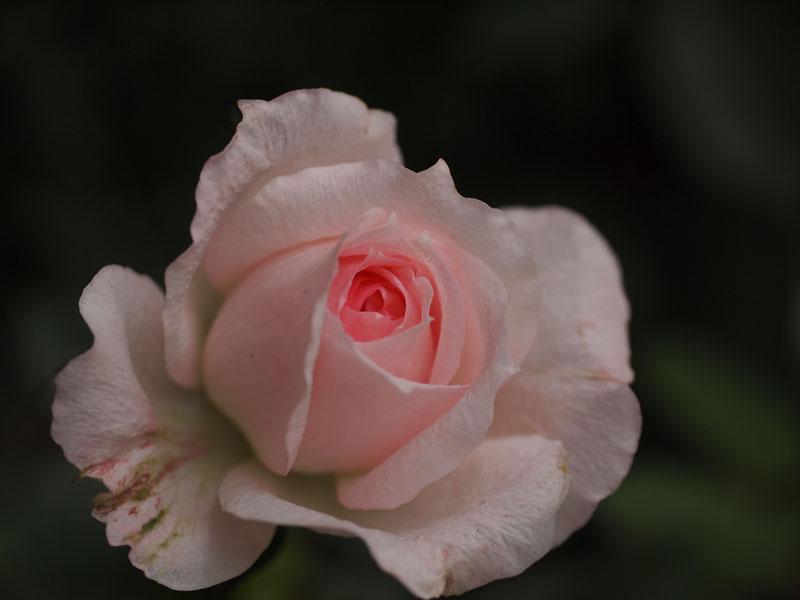 201106012.jpg