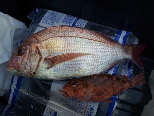 釣り②20131012