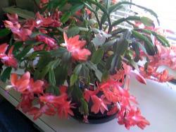 今年もたくさん花を咲かせました(^^)V
