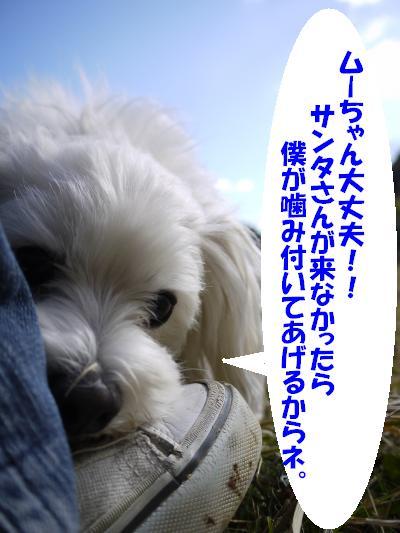 P1230696_convert_20091222145020.jpg