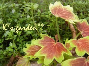 K's garden2