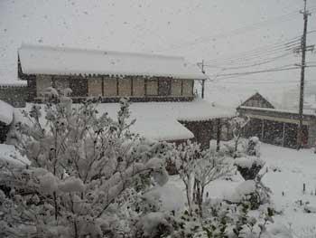 20101231-雪が降りました