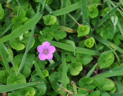 鏡ヶ成に咲いてた花