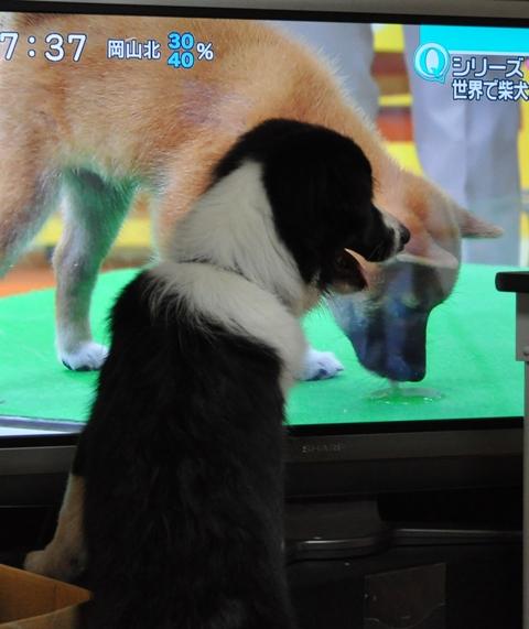 テレビ鑑賞2