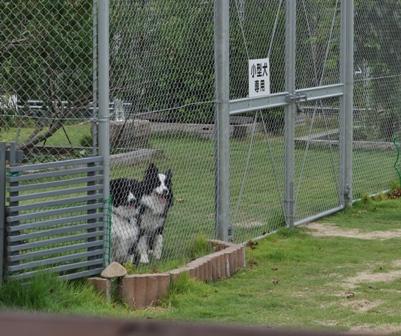 小型犬2匹