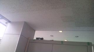 大黒屋天井2