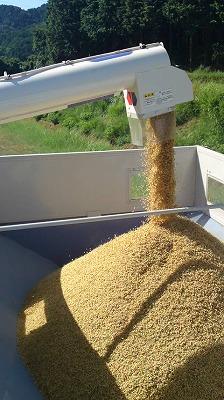 タンクの籾