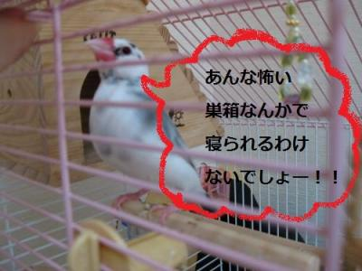 IMG_0821_20110106013024.jpg