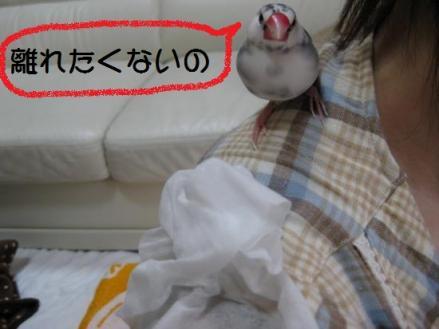 IMG_0942_20110110171741.jpg