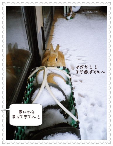 いなり雪3