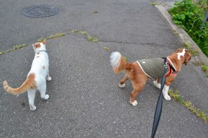 001散歩出発