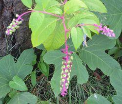 004植物1