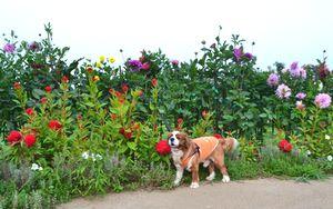 003公園花壇