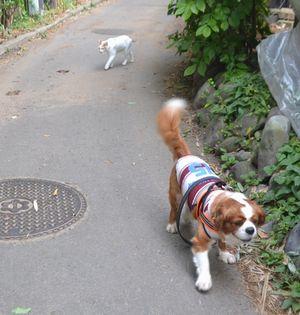 006散歩2