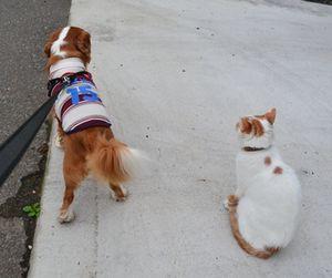001ショコにゃん散歩