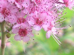 flower8-213large.jpg