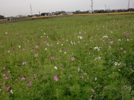 shukusho-CIMG0938.jpg
