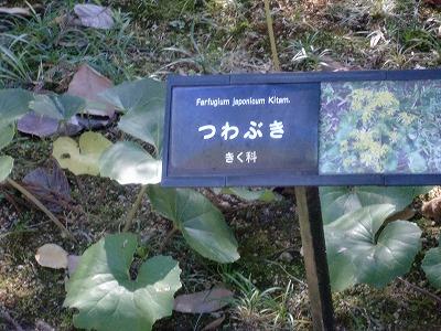 shukusho-CIMG1235.jpg