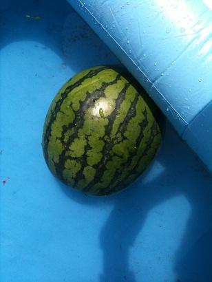 002-watermelon.jpg