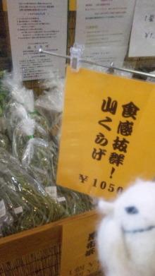 雑用姉妹-DVC00362.jpg