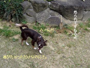 CIMG4271_edited-1.jpg