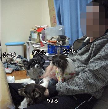 CIMG4548_20100328003508.jpg