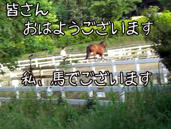 CIMG6474.jpg
