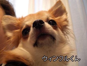 CIMG6966.jpg