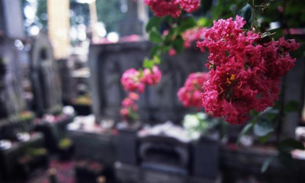 茂林寺の百日紅t
